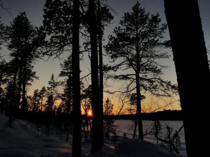 aurore-bois-hiver