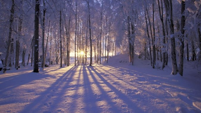 __beautiful-winter-sunrise-in-the-forest_p
