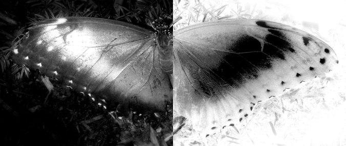 noir-blanc